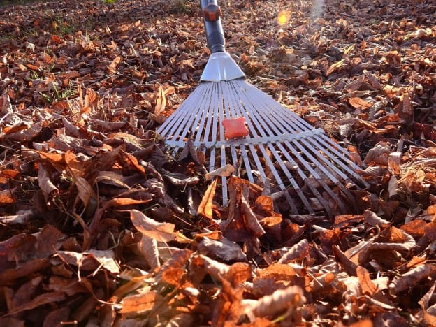 Raking Fall Leaves - Blue Crest Electric